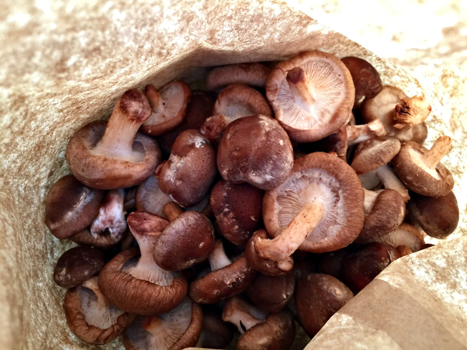 mushrooms2.jpg